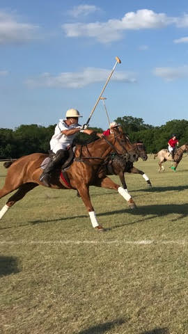 TX Polo Club 1